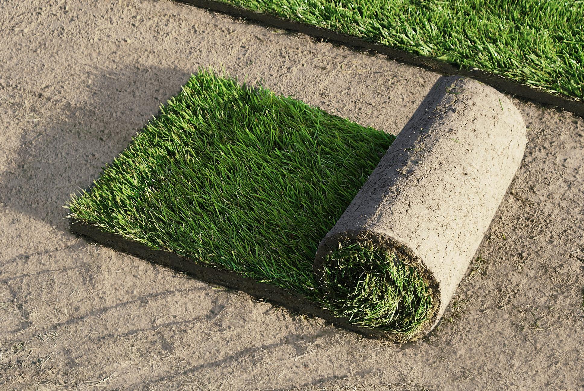 zakładanie trawnika - trawnik z rolki